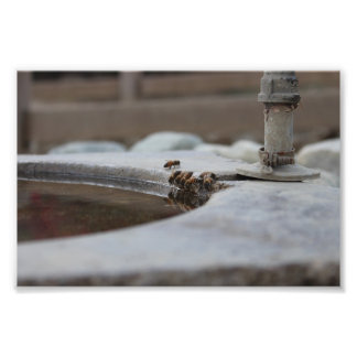 bee colony photo print