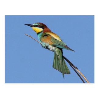 Bee-eater Postcard