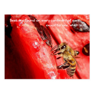 Bee fact Postcard / Bee on a watermelon