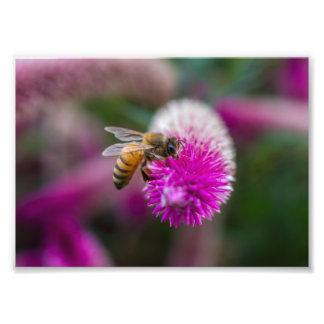Bee fed photo