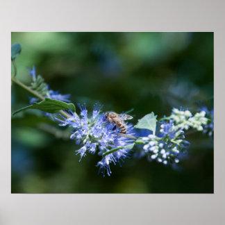 Bee flies on flower poster