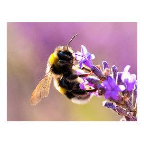 Bee Flower Beautiful Nature Scenery Postcard