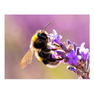 Bee Flower Beautiful Nature Scenery Postcard