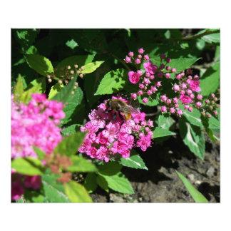 Bee Gathering Pollen Art Photo