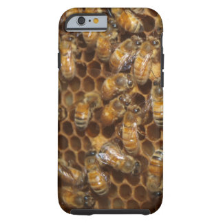 Bee Hive Tough iPhone 6 Case