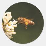 Bee - Honey I'm home Round Stickers