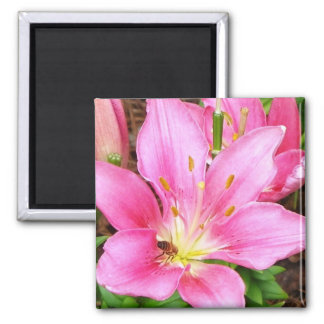 Bee in a Lilly Square Magnet