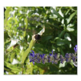 Bee in Flight Art Photo