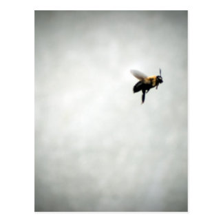 bee in flight postcard