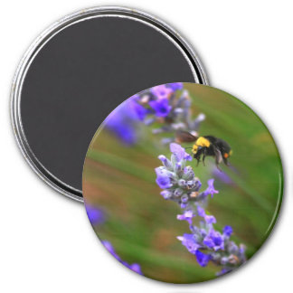 Bee in Lavender Magnet