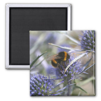 Bee in thistle square magnet