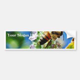 Bee Insect Bumper Sticker