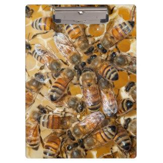 Bee keeping at Arlo's Honey Farm Clipboard