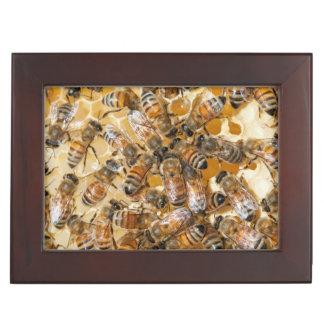Bee keeping at Arlo's Honey Farm Keepsake Box