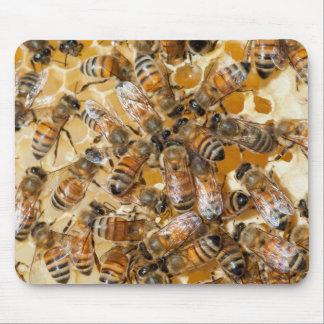 Bee keeping at Arlo's Honey Farm Mouse Pad