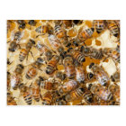 Bee keeping at Arlo's Honey Farm Postcard
