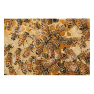Bee keeping at Arlo's Honey Farm Wood Canvases