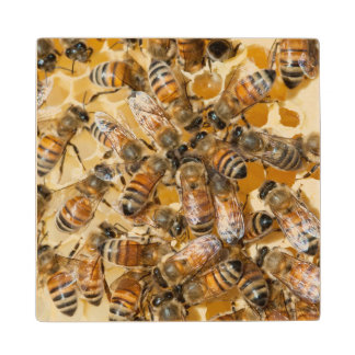 Bee keeping at Arlo's Honey Farm Wood Coaster