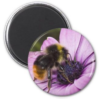 Bee on a beautiful flower 6 cm round magnet