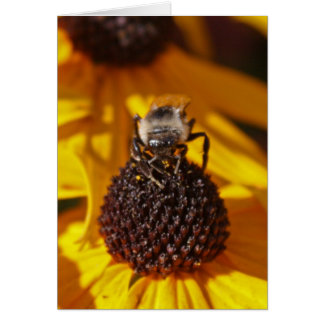 Bee on a Black Eyed Susan Greeting Card