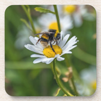 Bee on a daisy hard plastic coasters