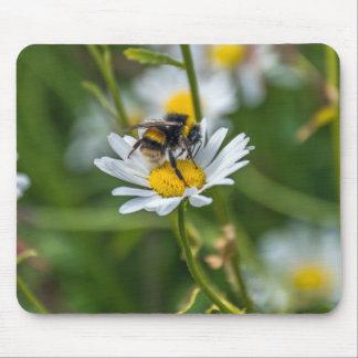 Bee on a daisy mousepad