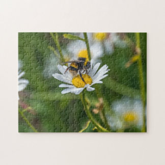 Bee on a daisy photo puzzle