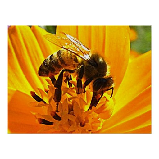 Bee on a Flower Print