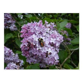 Bee on a Lilac Postcard