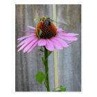Bee on a Purple Coneflower Postcard