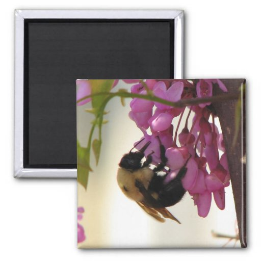 Bee on a Redbud Bloom Magnets