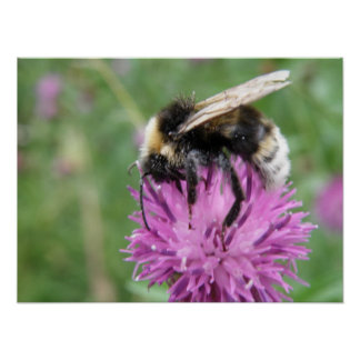 Bee on a Thistle Flower Print