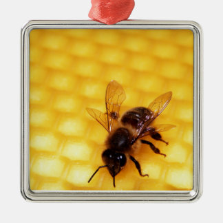 Bee on a wax christmas ornament