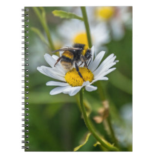Bee on a white daisy notebook