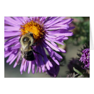 Bee on an Aster Card
