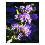 Bee on Butterfly Bush - Lavender Flowers Photo Art