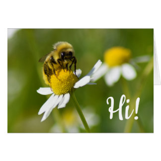 Bee On Camomile Flower Hi! Blank Photo Note Card