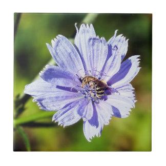 Bee on Chicory Flower Ceramic Photo Tile