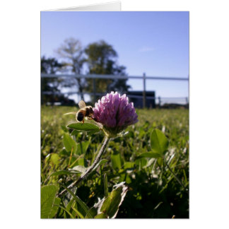 Bee on Clover Notecard