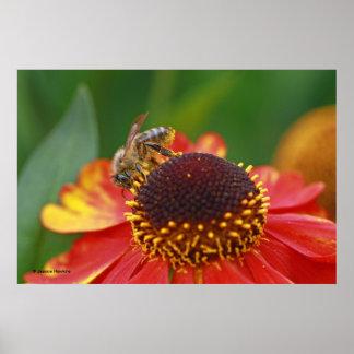 Bee on Echinacea Print