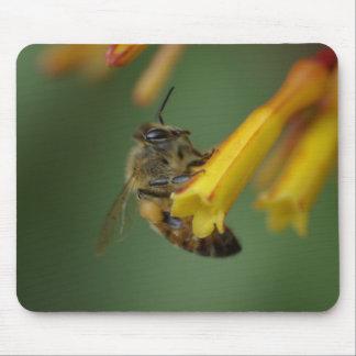 Bee on Firebush Mouse Mat