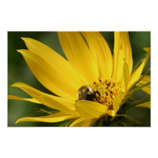 Bee on Flower 2 Poster
