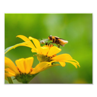 Bee on Flower Photo Print