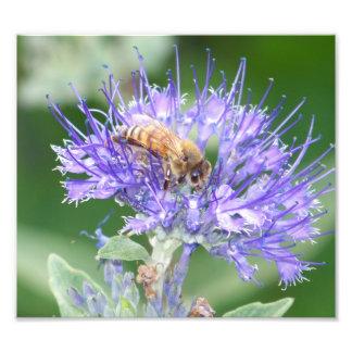 Bee on Flower Photographic Print
