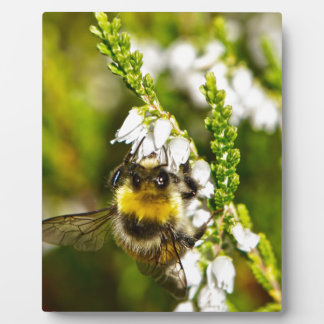 Bee on Lucky White Heather Plaque