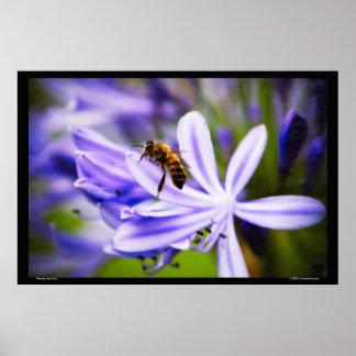 Bee on Maui Print