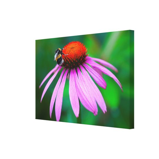 Bee on orange and pink flower canvas print
