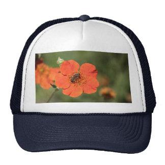 Bee on orange Potentilla Cap
