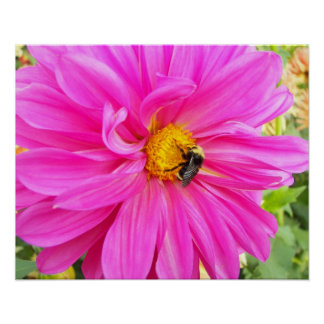 Bee on Pink Dahlia Floral Photo Poster