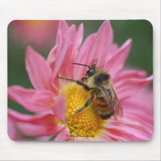 Bee On Pink Daisy Flower Photo Mousepad